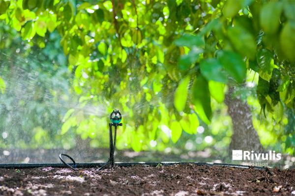 Béc tưới Rivulis S2000 tưới cây ăn trái
