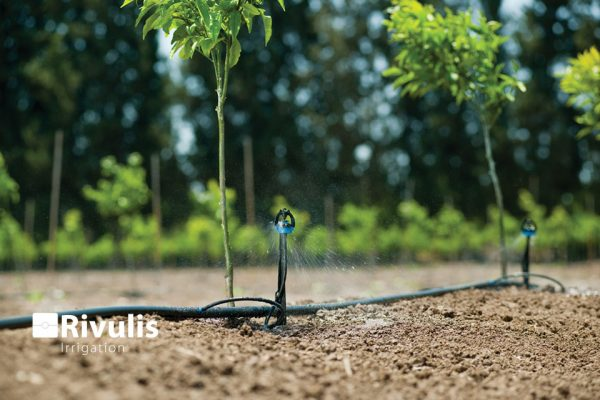 béc tưới s2000 có miếng ngàm tưới khi cây còn nhỏ, rễ nhỏ