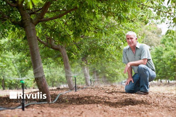 Đầu tưới phun mưa cho cây ăn trái Rivulis Tornado