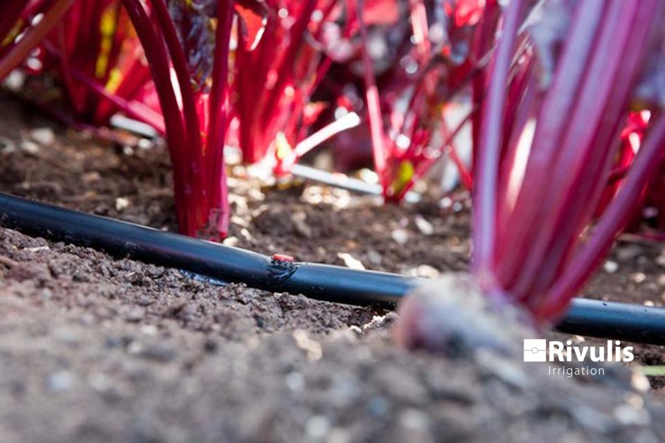Kết nối đầu nhỏ giọt Katif vào ống để tưới rau màu