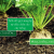 Lợi ích tưới nhỏ giọt cho củ cải đường