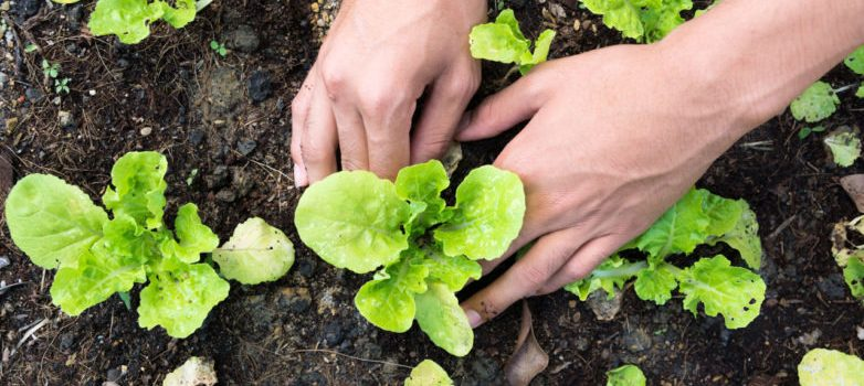 fertilization-methods-for-a-successful-garden-782x440