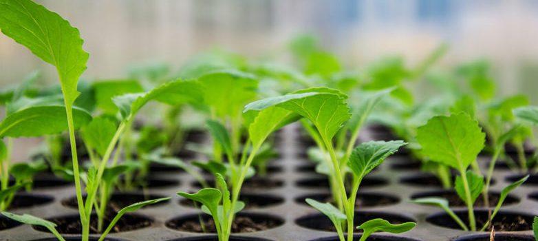 plant-starts_1-782x518
